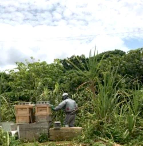 理想のハチミツの秘訣 - 少ない箱を置く養蜂方式