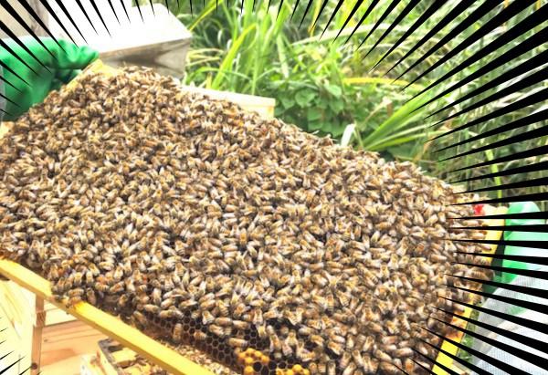 元気いっぱいのミツバチたちを見てください!
