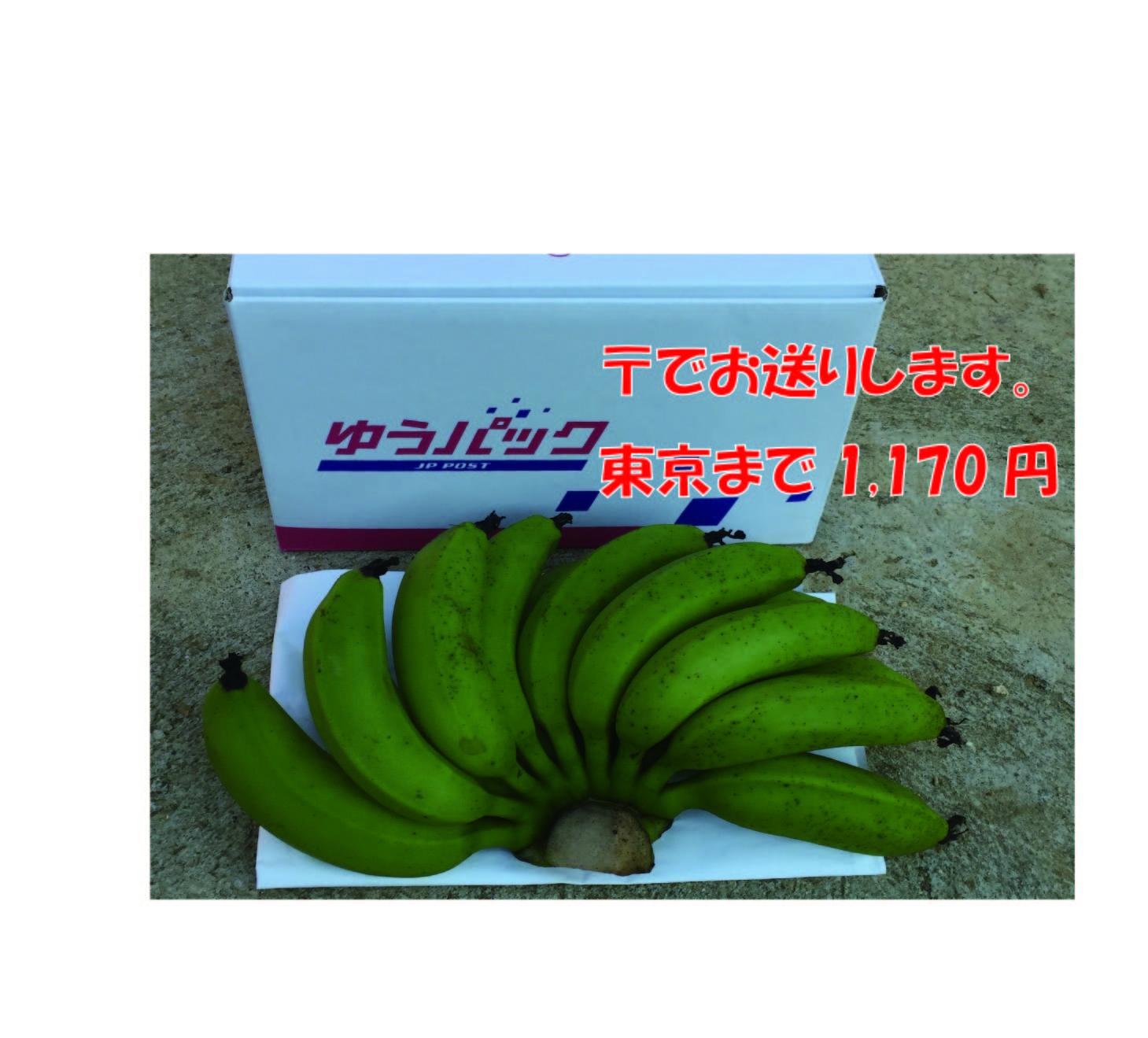 石垣島のミニバナナ