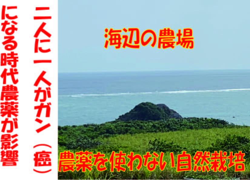 https://sizen.okinawa/img/satoukibi/01.jpg